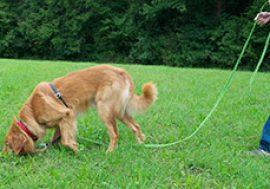 Fährtenhunde