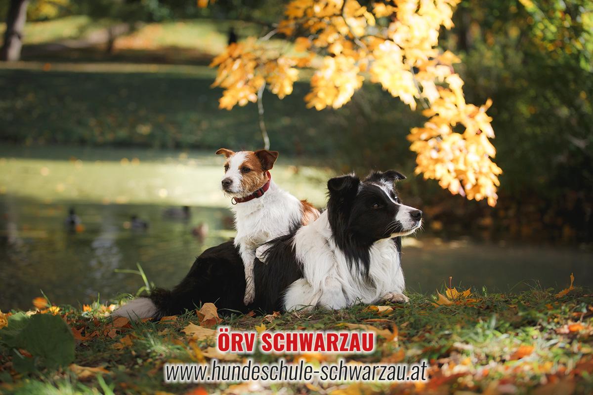 Hundeschule Neunkirchen Ternitz Wiener Neustadt